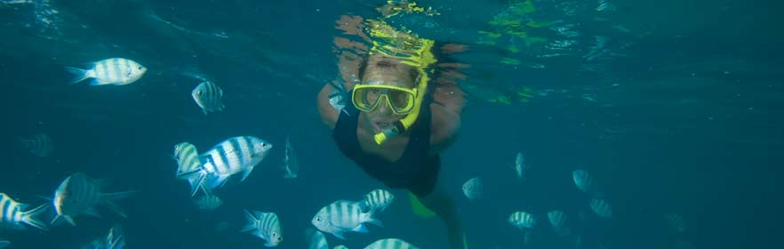 Snorkling and diving